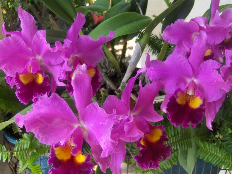 3 cuidados básicos para cultivar orquídeas sem ser especialista