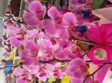 4 dicas para plantar orquídea