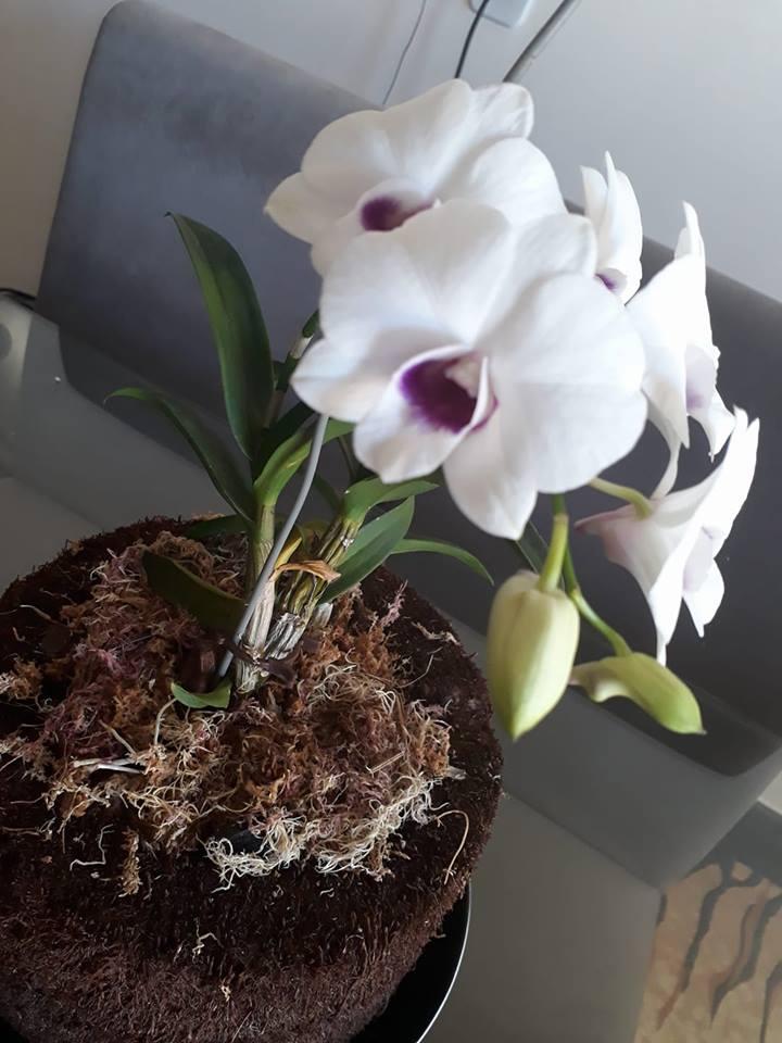 5 erros cometidos após comprar a primeira orquídea