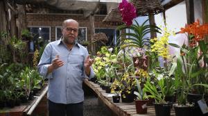 Curso completo - Como cuidar orquideas