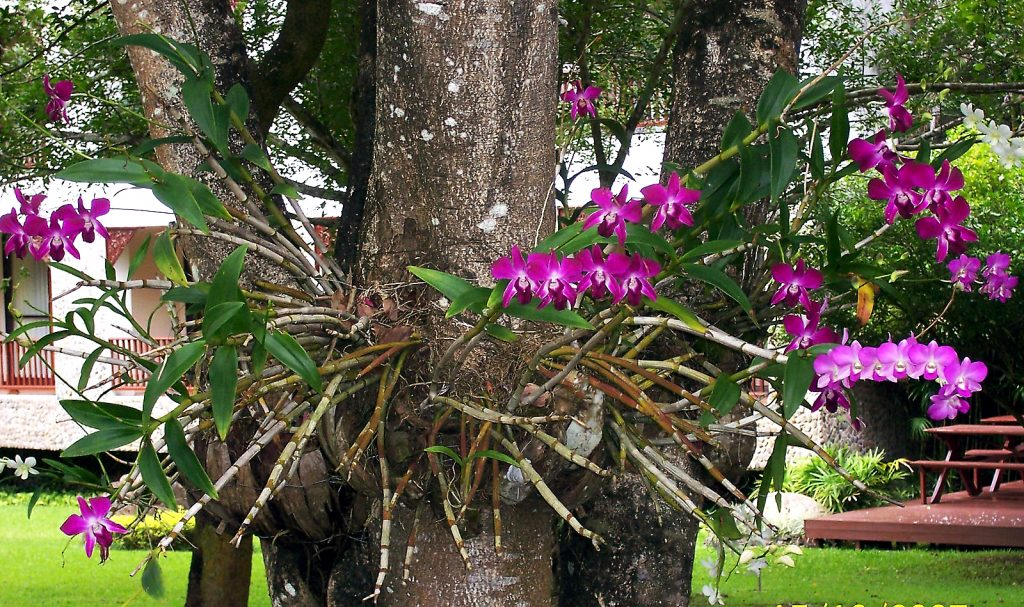 Cuidar-de-Orquideas