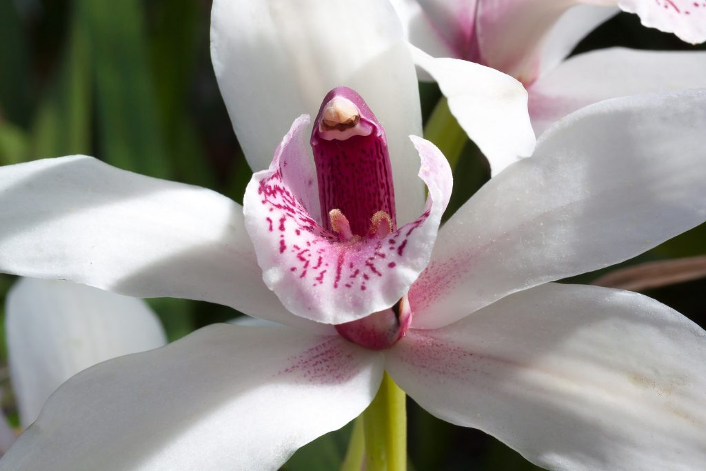 Cymbidium 1024x683 - Como cuidar de orquídeas