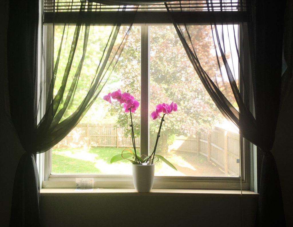Oquideas Apartamento 3 1024x794 - Como cuidar de orquídeas