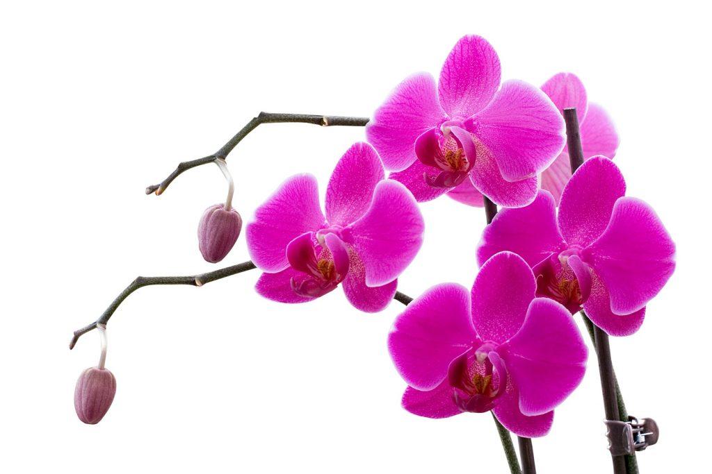 Orquidea foto02 1024x683 - Como cuidar de orquídeas