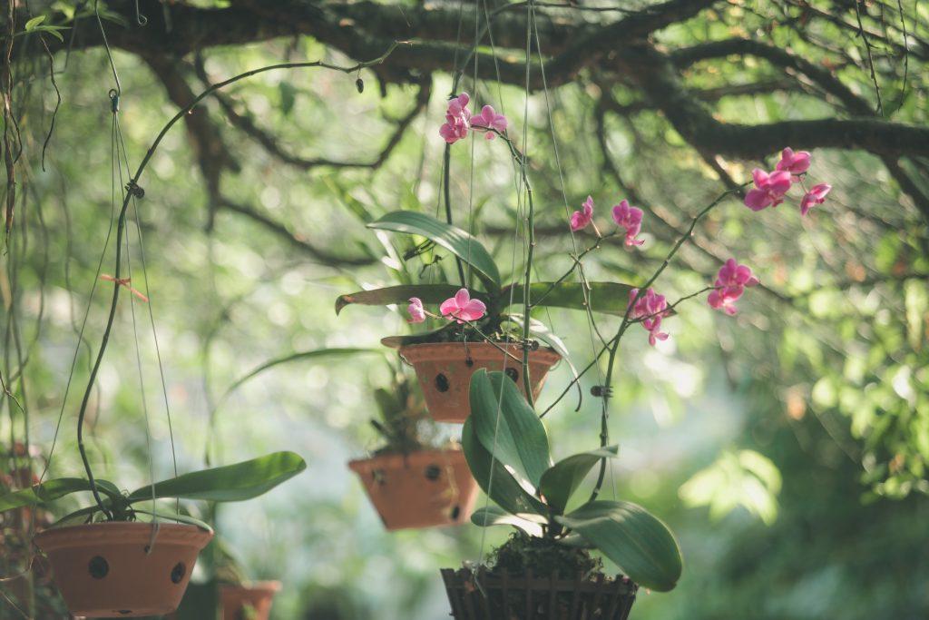 beautiful bloom blooming 2231574 1024x683 - TIPOS DE ORQUÍDEAS