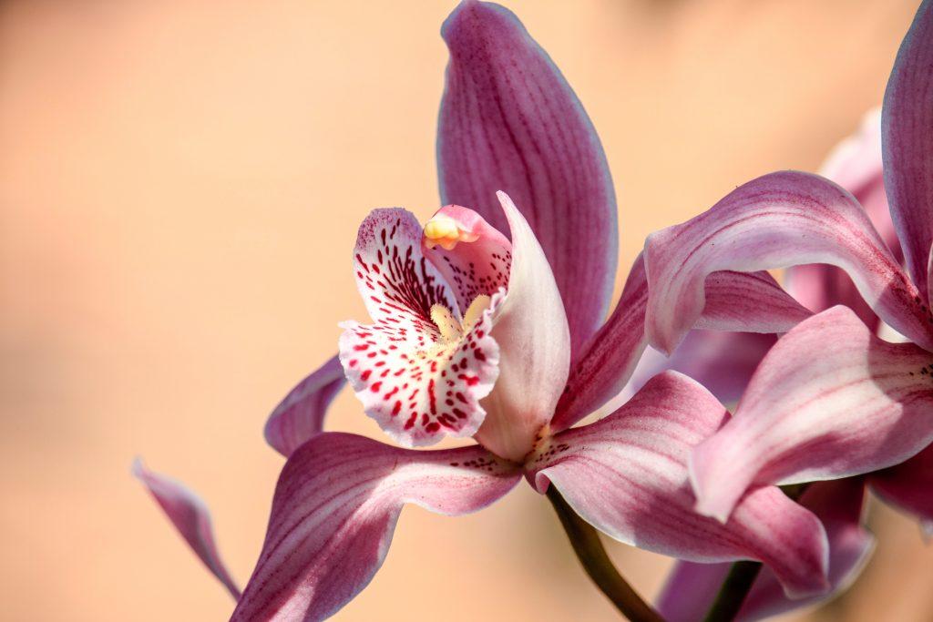 bloom-blossom-flora-1136888