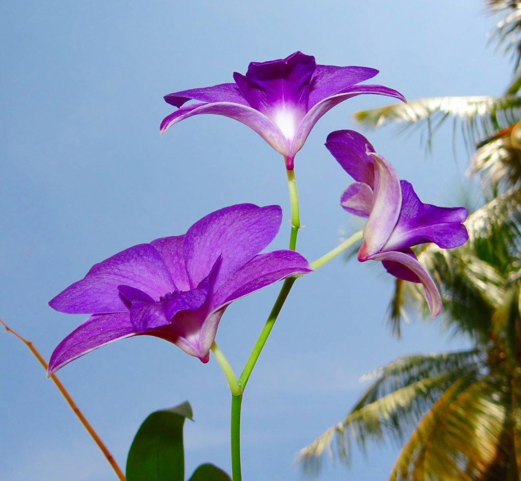 orchid 172205 1920 1024x946 - TIPOS DE ORQUÍDEAS